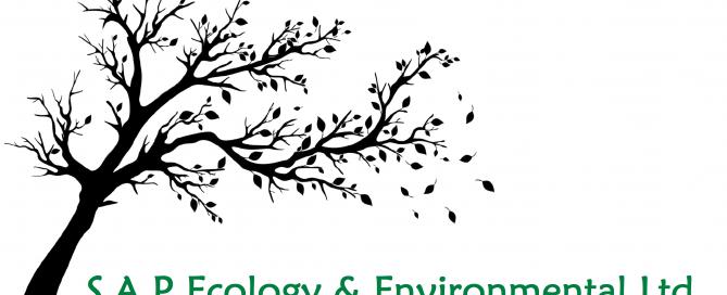 sap ecology